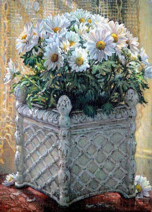 Marguerites blanches